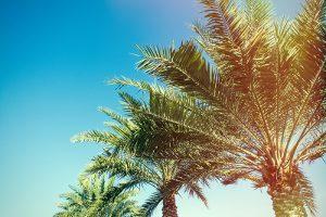 Pondering Palm Sunday